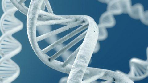 Гены — это то, что влияет на цвет кожи, природный запах, и на то, чем мы болеем