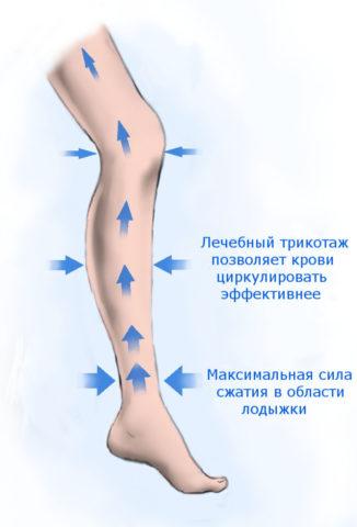 Компрессионное белье направленно сжимает венозные сосуды, помогая крови двигаться вверх.