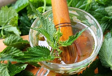 Крапива, представленная на фото, является самым популярным средством для лечения варикоза.