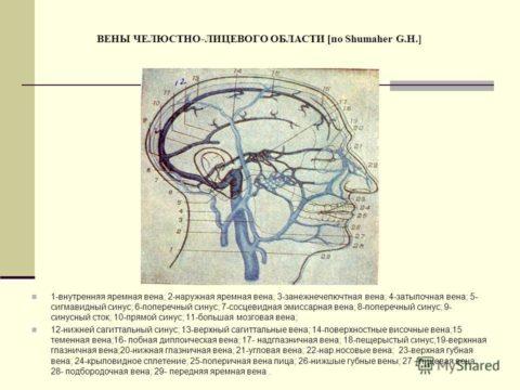 На рисунке изображены вены лица и венозные синусы полости черепа