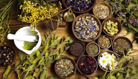 Перед применением травяных сборов следует исключить возможные аллергические реакции.