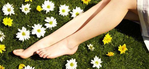 Растительные лекарства являются основой народного лечения