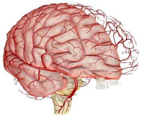 Большинство медикаментов назмачаются для лечения и профилактики заболеваний мозга