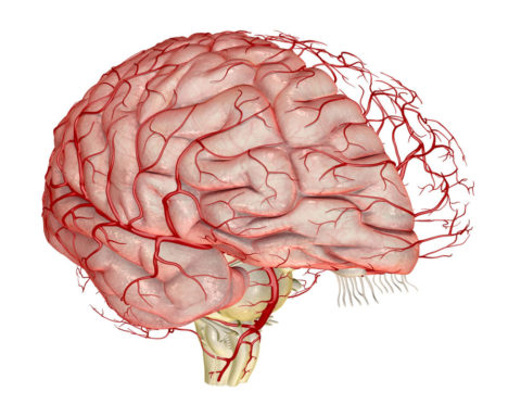 Мозг потребляет до 20% кислорода и питательных веществ из циркулирующей по организму крови