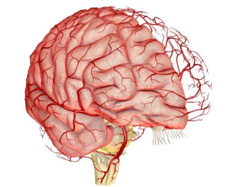 Нарушение кровообращения на любом участке головного мозга быстро вызывает гибель нейронов