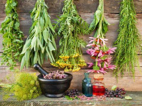 Растения – лучшие средства, которые предлагает матушка-природа