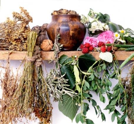 Специалисты не исключают возможность использования трав в медицинских целях