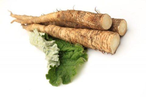 Использовать корни лопуха можно для приготовления как многокомпонентных, так и однокомпонентных сборов