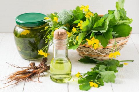 Лекарственные растения – лучшие средства против тромбофлебита