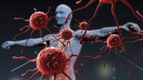 Макрофаги, отвечающие за иммунитет