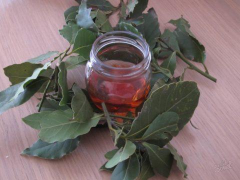 Состав растения обогащен массой полезных веществ