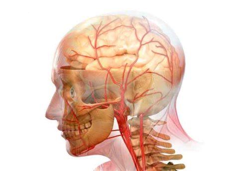 Церебральные артерии