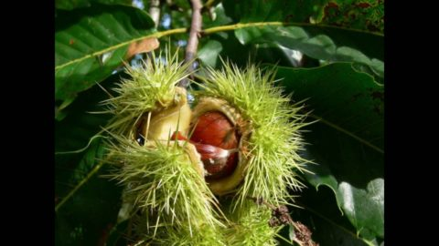 Существуют съедобные плоды – они очень полезны