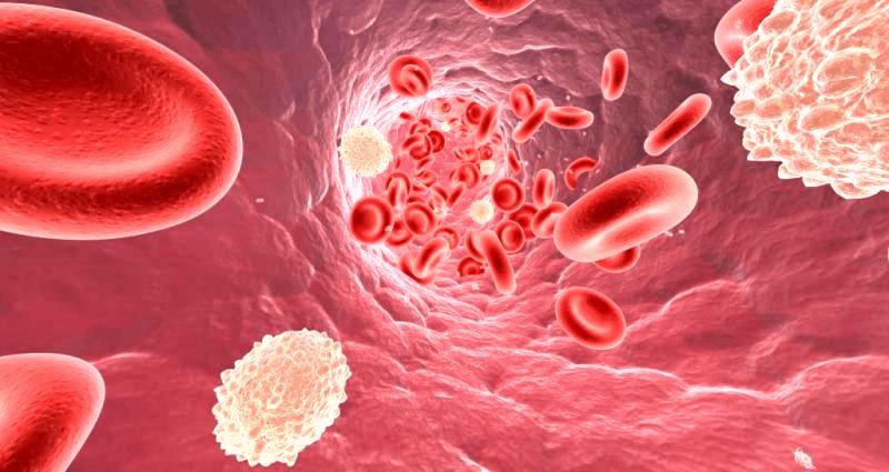Активные компоненты, содержащиеся в чесноке, способствуют разжижению крови