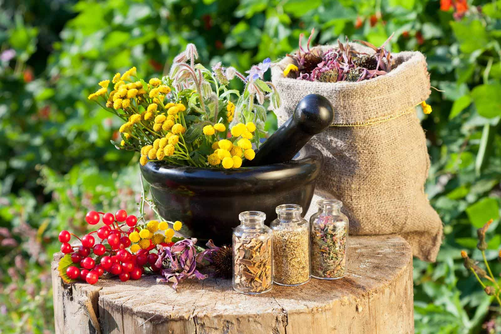 Лекарственные травы и цветы