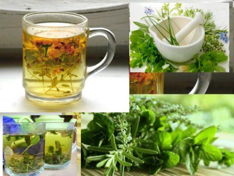 Лекарственные травы – лучшие средства для лечения спазмов