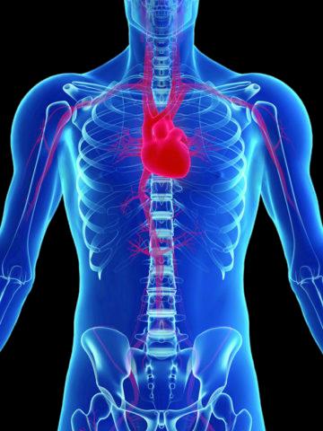 Нормальная насосная функция сердца обеспечивает питанием все органы и ткани.