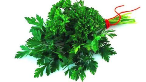 Петрушка насытит организм полезными веществами и витаминами.