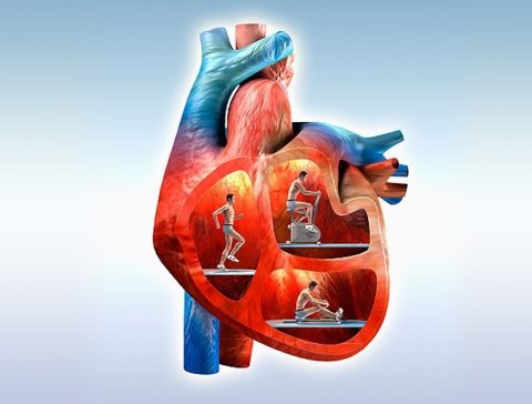 Постоянные занятия – залог здоровья.