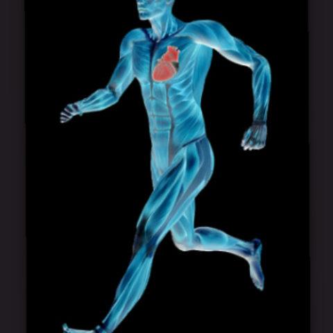 Простые упражнения для сердца.