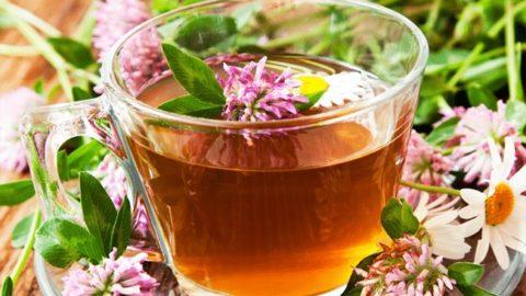 Укрепить и повысить тонус сосудов поможет ароматный чай с медом и соцветиями клевера.