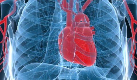 Чаще всего стентирование проводится на сосудах сердца