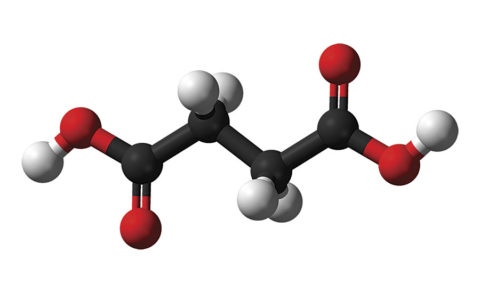 Химическая формула сукцината – HOOC-CH2-CH2-COOH