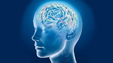 Как скопления кальция в сосудах головного мозга влияют на жизнедеятельность организма.