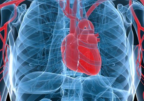 Как сохранить здоровье коронарных артерий.