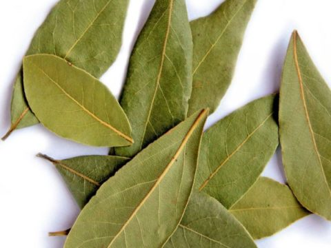 Очищать сосуды лавровым листом следует только при отсутствии противопоказаний.