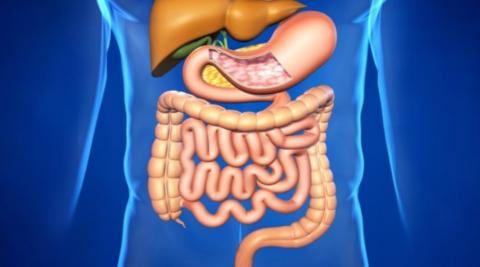 Опасным последствием сниженного поступления крови в кишечник является некроз тканей