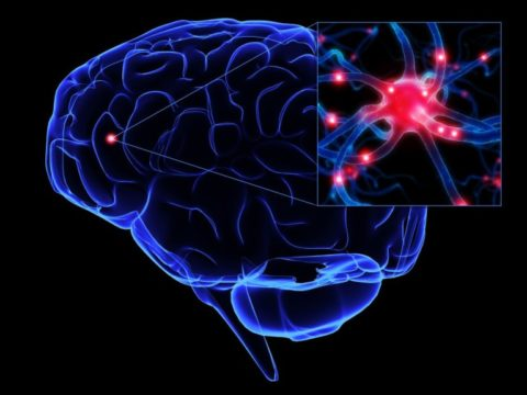 Особенно эффективна янтарная кислота при церебральных сосудистых нарушениях
