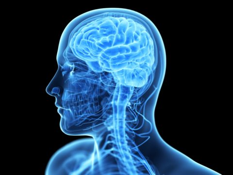 Особенности строения головного мозга человек.