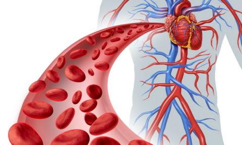При нарушении кровообращения органы и ткани испытывают гипоксию