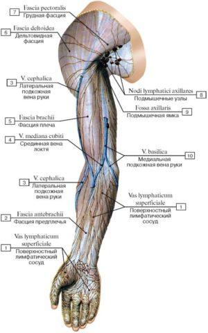 Схема лимфооттока на верхней конечности