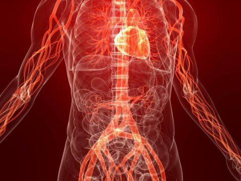 Сосудистые лекарства помогают наладить микроциркуляцию в периферических тканях