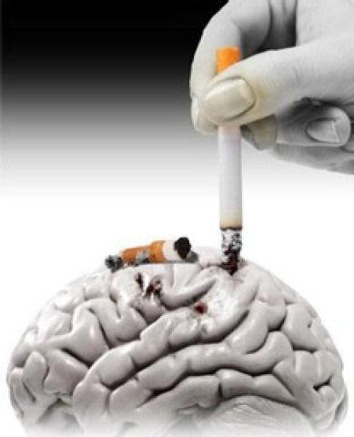 Табакокурение – не просто зависимость, а испытание для сосудов головного мозга.