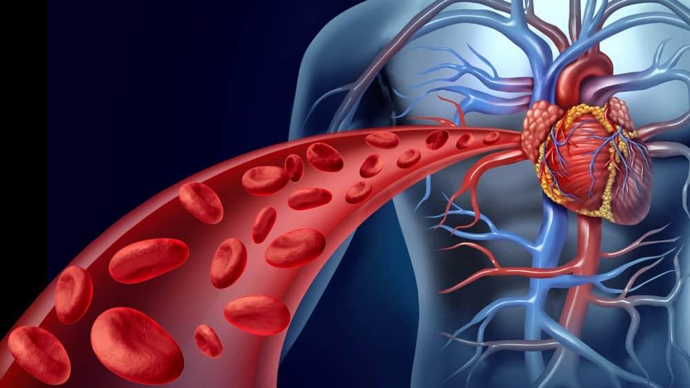 Нормальный ток крови по сосудам – основа жизни организма.