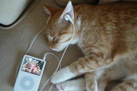 Даже животным иногда полезно погрузиться в пленительный мир музыки.