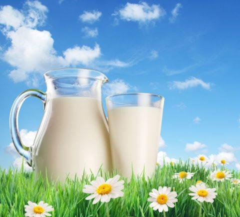 Какие молочные продукты стоит включить в меню.