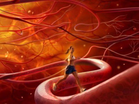 Упражнения и бег полезны для очищения сосудов ног