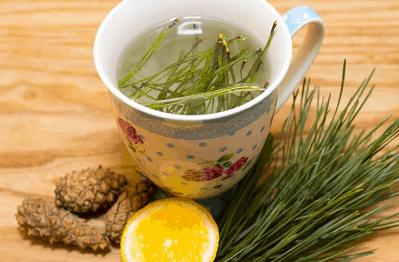Чай из молодой сосновой хвои