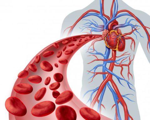 С возрастом замедляется движение кровотока, в мелких сосудах ослабевают транспортные процессы, что приводит к ишемии