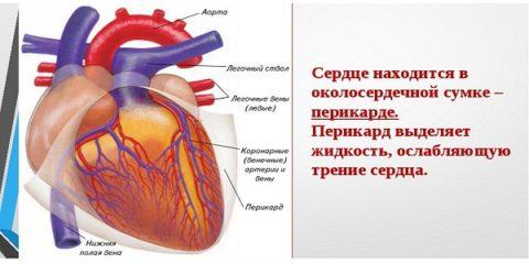 Патологии сердечной сумки и мускулатуры
