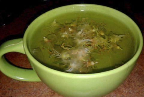 Чай из соцветий каштана – очень полезен при варикозе