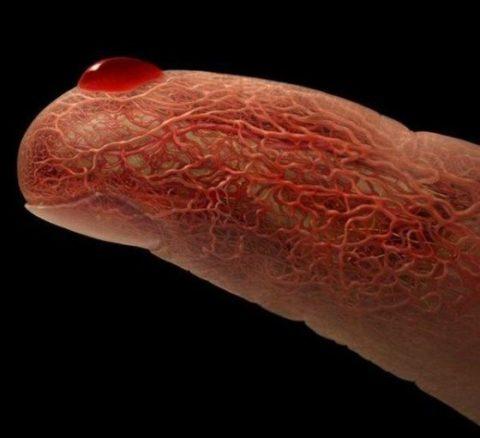 Схематическое изображение капилляров на пальце