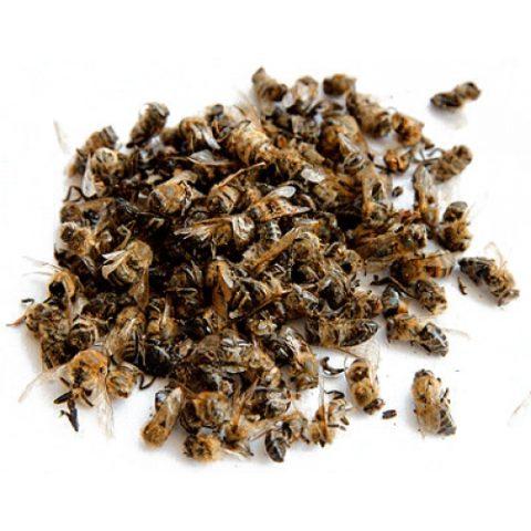 Пчелиный подмор используется для лечения многих заболеваний.