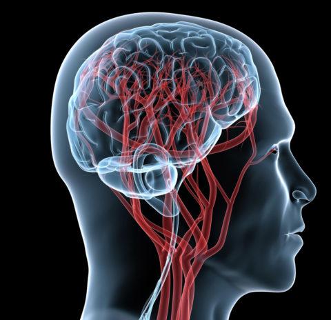 Мозг нуждается в регулярном поступлении кислорода и питательных веществ