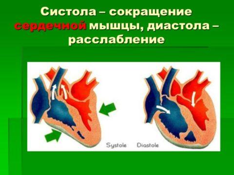 Систола и диастола сердечной мышцы