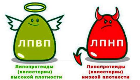 Свойства различных фракций ХС отличаются